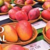 24th Annual International Mango Festival at Fairchild Tropical Botanic Garden