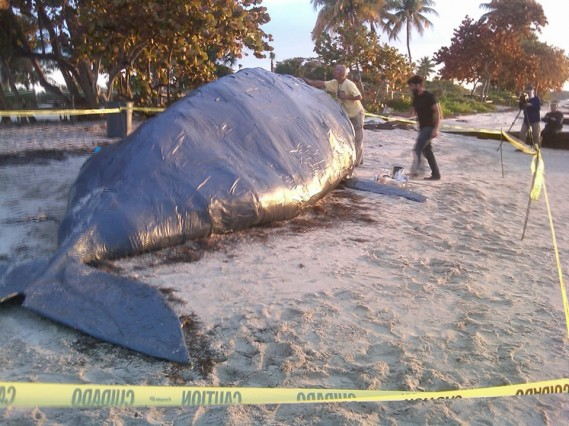 Giant Paper Mache Whale