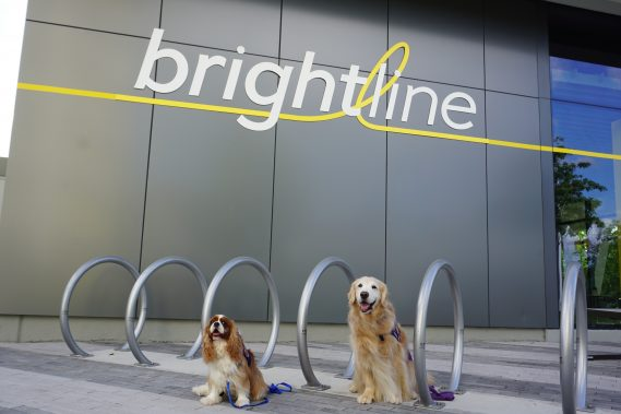 Therapy Dogs to Bring Joy and Stress Relief to Brightline Riders for World Mental Health Day