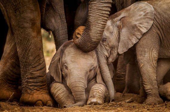 Addo Elephant Park by 4x4 in Port Elizabeth