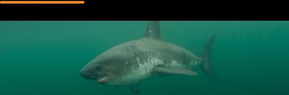 Shark Talk webinar