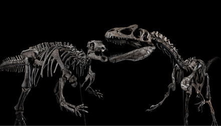 Camptosaur and Allosaur skeletons presented by Jason Jacques Gallery ©Jason Jacques Gallery.